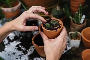 Как правильно пересадить растения: инструкция в 4 шага
