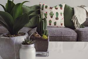 8 модных комнатных растений и советы по уходу за ними