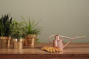 Как разместить растения в интерьере: 11 способов и 7 красивых аксессуаров