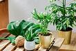 10 растений, которые вырастут даже на холодном балконе