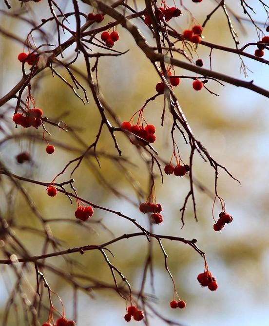 Цветущие кустарники для Сибири: список сортов с фото и названиями от ivd.ru