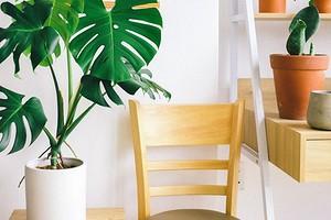 12 способов увлажнить воздух в квартире, не покупая увлажнитель