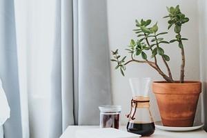 Как убрать затхлый запах с одежды, из шкафа и квартиры: 12 эффективных способов