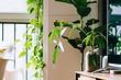 7 важных советов по уходу за комнатными растениями зимой