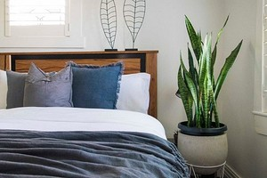 6 идеальных комнатных растений для спальни