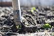 Какие удобрения вносить осенью: подробный гид для начинающих дачников
