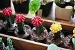 6 самых красивых кактусов, которые приживутся у каждого
