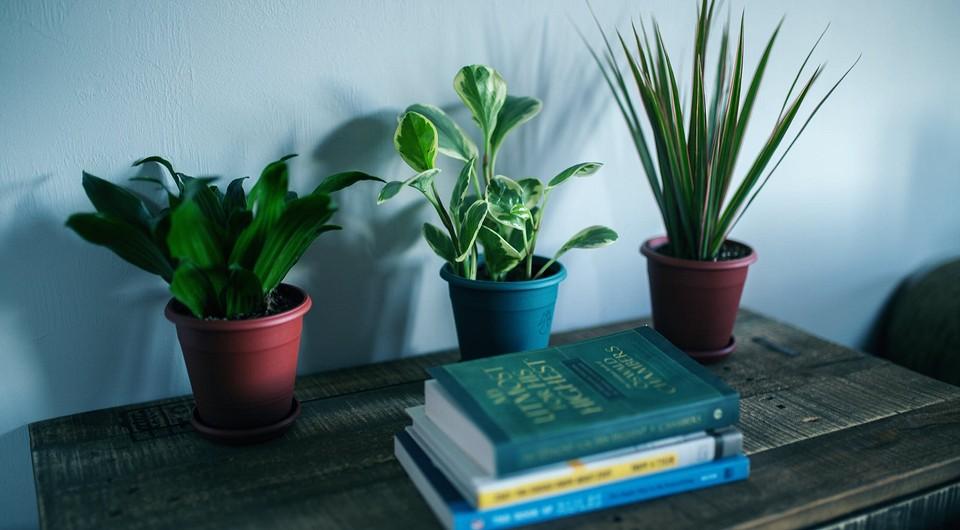 8 идеальных растений для темной комнаты