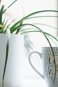 8 идеальных растений для кухни