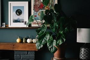 Как правильно мыть комнатные растения (и нужно ли это делать)