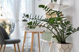 8 самых красивых комнатных растений для вашей квартиры (и декора не нужно)