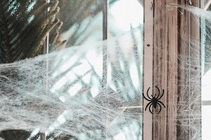 Как избавиться от пауков в доме: эффективные народные и магазинные средства
