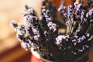6 растений с приятным ароматом, которые можно посадить дома