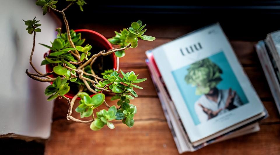 Простая инструкция по обрезке комнатных растений для новичков