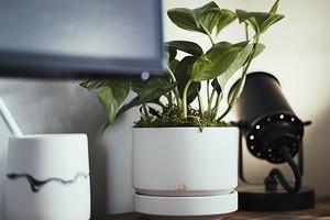 7 комнатных растений, которые не нужно часто пересаживать