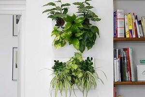 6 эффектных комнатных растений для маленькой квартиры