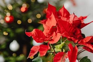 5 красивых растений, которые цветут зимой