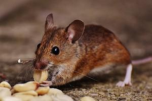 Как выбрать лучший отпугиватель мышей: критерии и рейтинг устройств