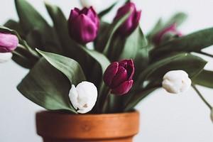 5 домашних растений, которые создадут весеннюю атмосферу, даже если тепло еще не настало