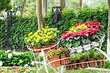 Что посадить вдоль забора на даче: подборка деревьев, цветов и кустарников