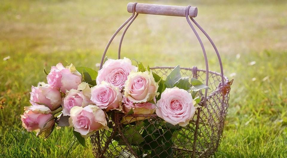 Уход за розами весной: чем подкормить, как обрезать и когда сажать