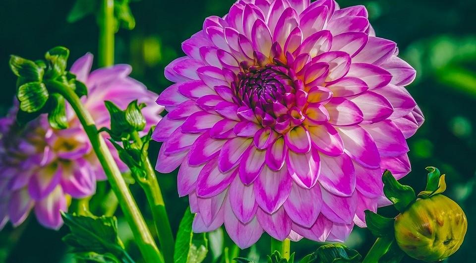 Какие цветы сажать весной в открытый грунт — список лучших и советы от IVD.ru
