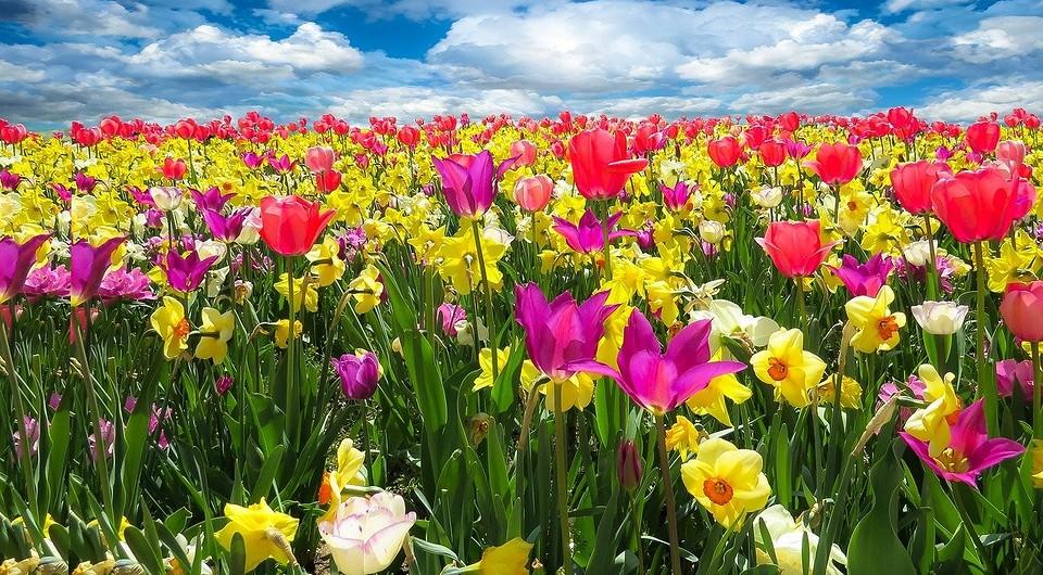 Посадка тюльпанов весной: можно ли сажать, когда и как правильно посадить своими руками — IVD.ru