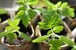 На заметку садоводу: что сажают в апреле на даче