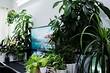 5 причин избавиться от всех домашних растений раз и навсегда
