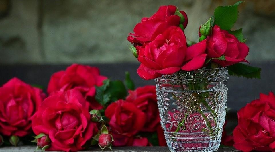 Как посадить и вырастить розу из букета в домашних условиях — советы по укоренению черенков