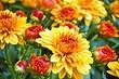 Какие цветы посадить на даче в апреле: список красивых растений для вашей клумбы