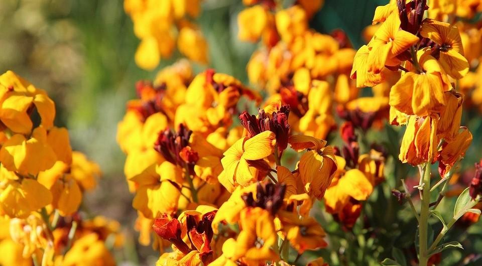 Какие цветы посадить в апреле в открытый грунт: лучшие сорта — IVD.ru