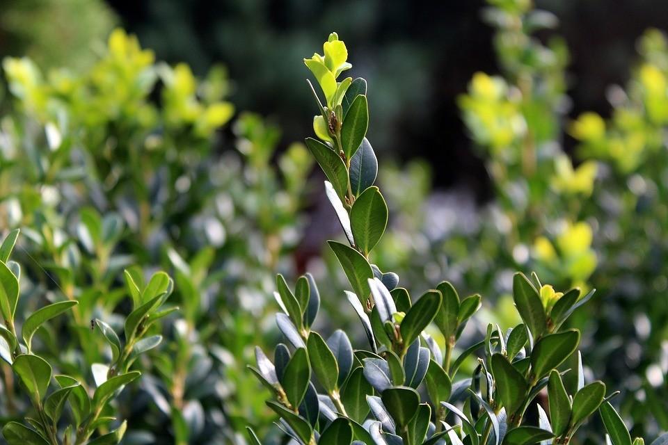 8 ядовитых дачных растений, которые нельзя сажать на участке (или нужно срочно уничтожить)
