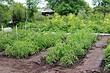 Как навсегда избавиться от слизней в огороде