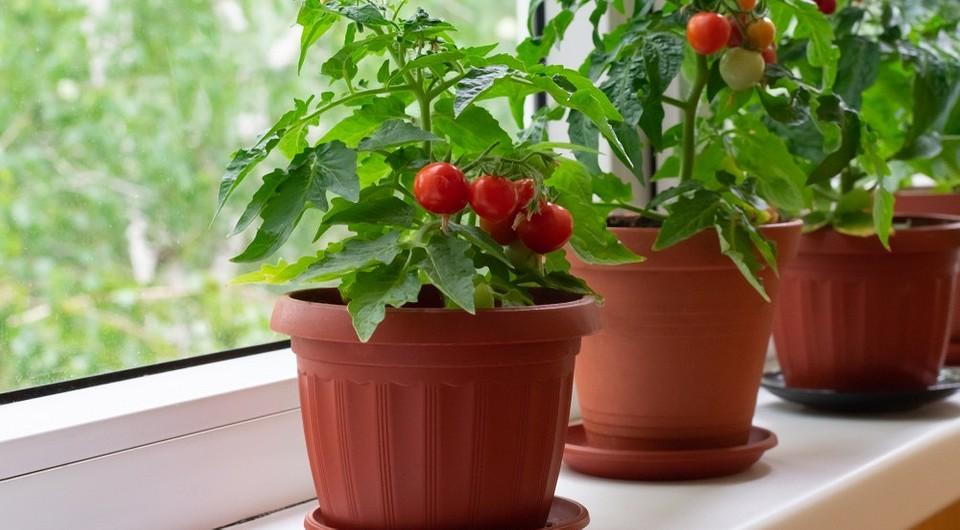 Огород в городской квартире: 7 фруктов и овощей, которые вы легко вырастите, если нет дачи
