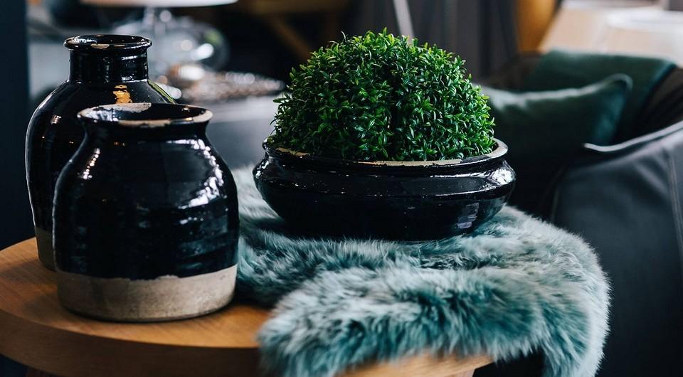 Как не испортить интерьер комнатными цветами: 5 советов