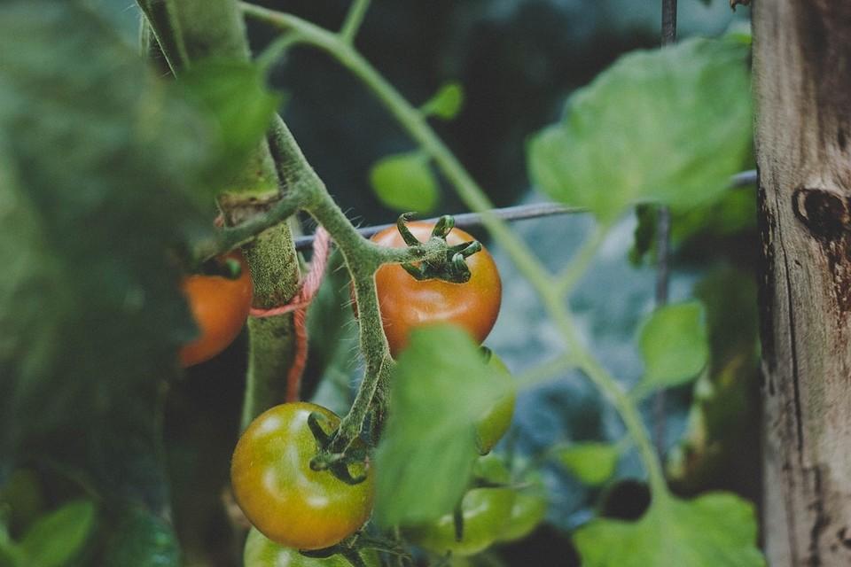 Что посадить на даче: 7 идей, почти не требующих усилий и затрат