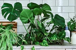 Датчик влажности почвы и еще 7 полезных и бюджетных товаров из ИКЕА для комнатных растений