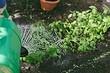 10 признаков горе-садовода, который загубит весь урожай (проверьте себя)