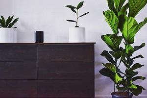 Выбираем комнатное растение онлайн: 6 важных моментов, которые нужно знать