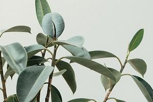 6 самых частых болезней комнатных растений и как их лечить