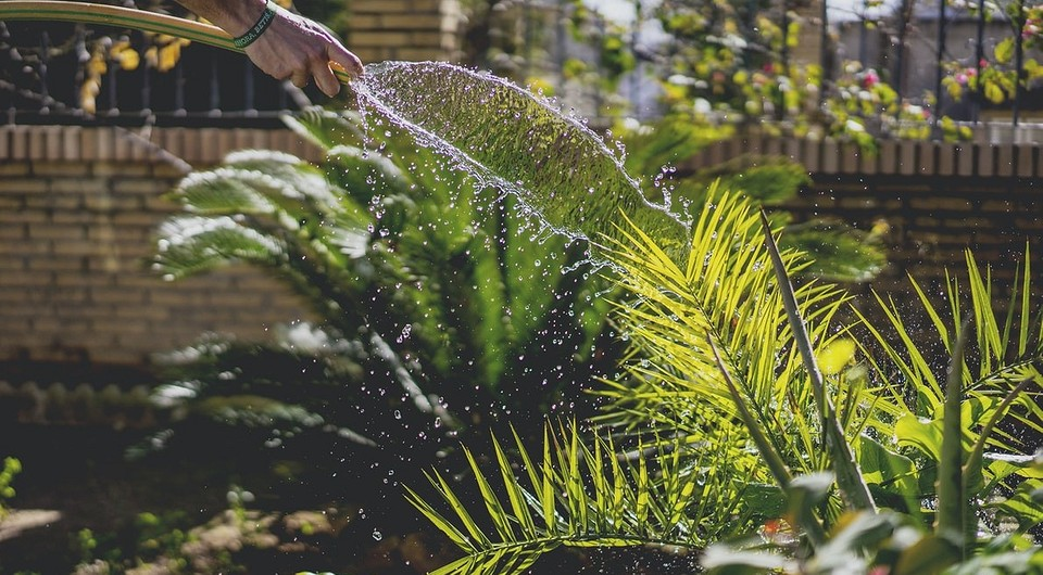 5 советов по работам на участке для ленивых садоводов