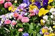 8 красивых растений для сада, цветущих весь дачный сезон
