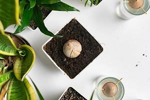 Что вырастить на подоконнике из продуктов, которые есть у вас дома: 4 простых варианта