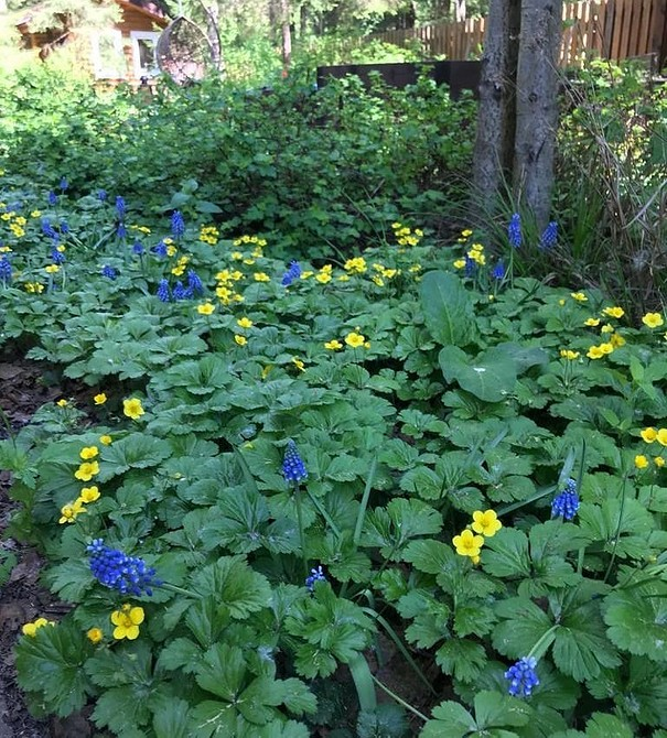 Как оформить красивый сад на неподходящем участке: простые решения 4-х проблем