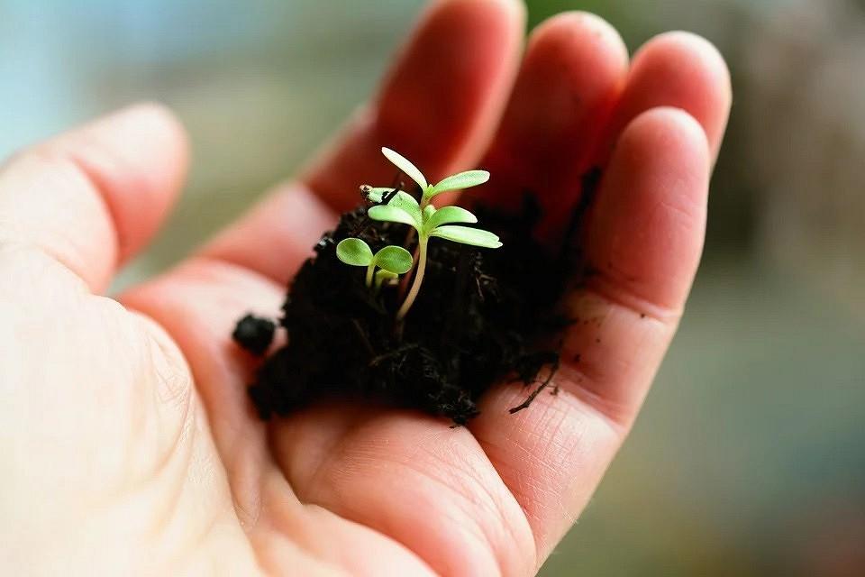 Можно ли использовать в садоводстве просроченные семена и как их оживить: 7 способов