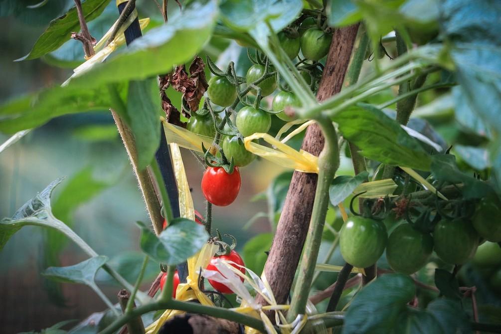 9 самых распространенных вредителей и болезней садовых растений (и что с ними делать)