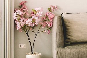 Сад у вас дома: 9 лучших цветущих комнатных растений с названиями и фото