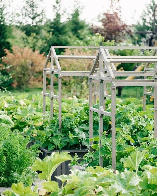 Для неопытных садоводов: 5 советов о том, как создать свой первый огород
