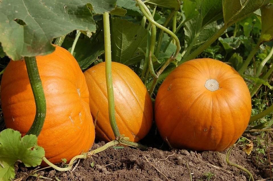Как защитить садовые посадки в жару: 8 важных советов по сохранению урожая